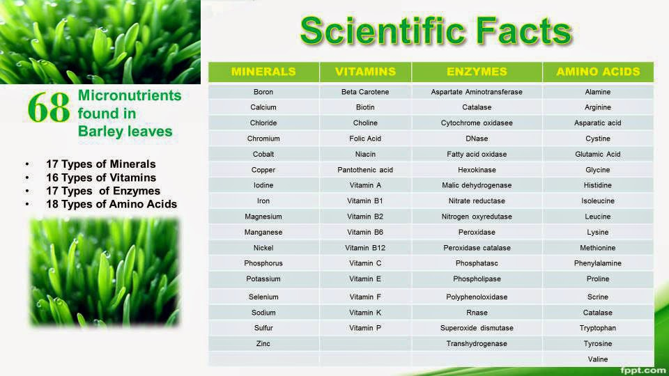 barley grass powder benefits